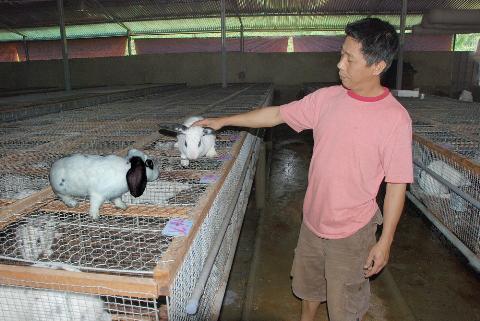 Kỹ thuật nuôi thỏ sinh sản cho năng suất cao