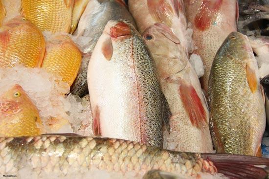 Cách chọn cá ngon, an toàn