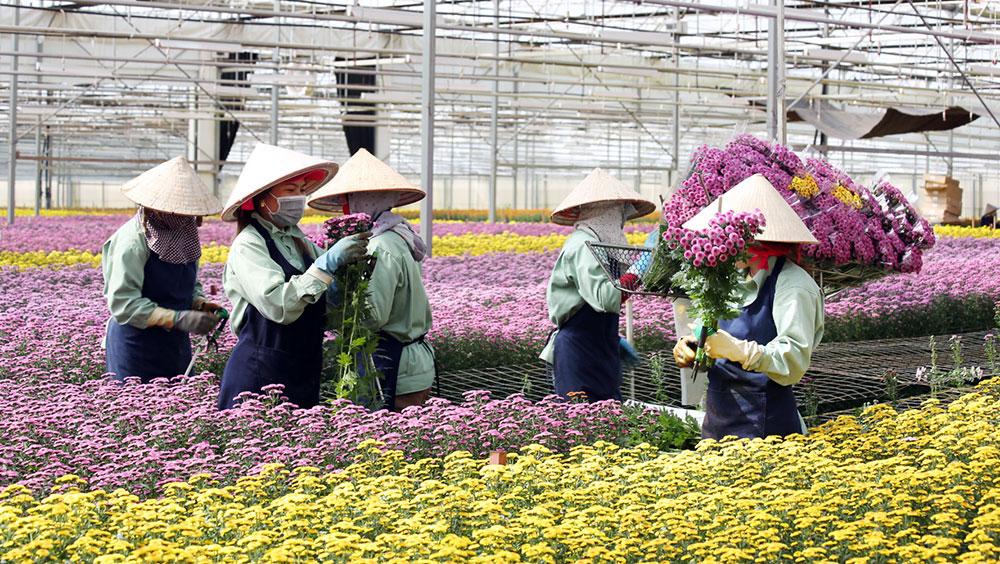 Lâm Đồng chấp thuận dự án nông nghiệp công nghệ cao của Dalat Hasfarm - ảnh 1