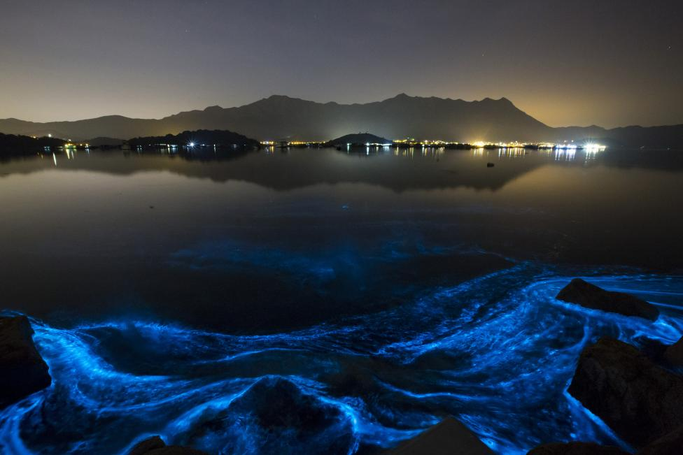 Những làn sóng xanh rực rỡ trong bóng tối được gọi là tảo nở hoa gây hại, hay 'thủy triều đỏ', được nhìn thấy vào ban đêm gần bãi biển Sầm Mun Tsai tại Hồng Kông ngày 22 tháng Giêng, năm 2015. REUTERS / Tyrone Siu.