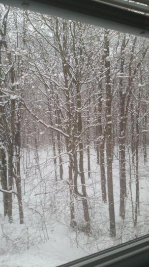 Rừng cây này đã bị đóng băng bởi bão tuyết.