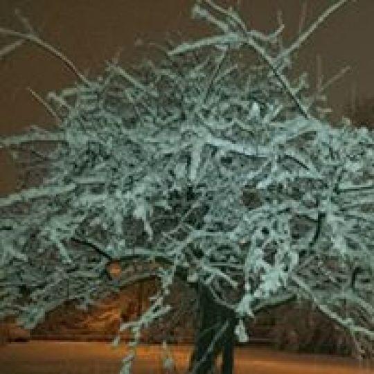 Tuyết làm băng giá  một bụi cây trong khu Cove của Stamford.