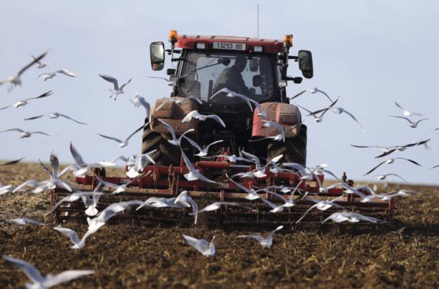 Đàn cò bay gần máy kéo của một nông dân Pháp trên  một cánh đồng ở vùng  Ault gần Le Treport, miền Tây nước Pháp.