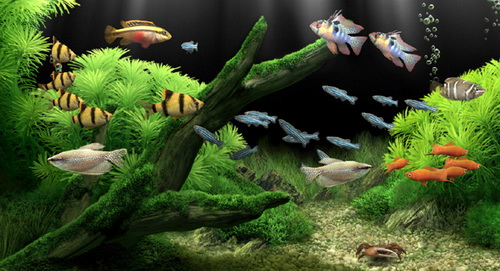 Bài trí bể cá cảnh hợp phong thủy mang lại tài lộc - ảnh 1