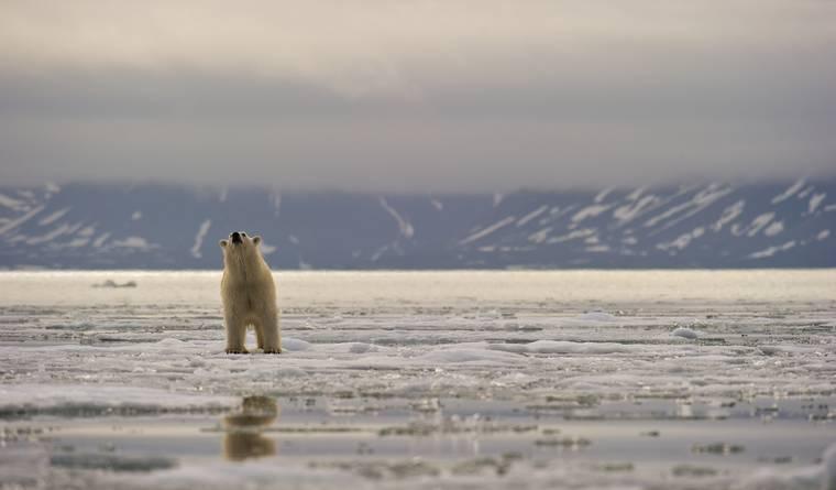 Bảo vệ môi trường, chúng ta khinh bỉ nó. Hàng tuần nó đưa ra những đạo luật mới- Ảnh: Getty Images