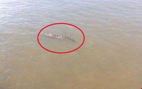 Hiện các lực lượng chức năng vẫn đang tìm cách lùng bắt cá sấu sổng chuồng bơi trên sông Soài Rạp