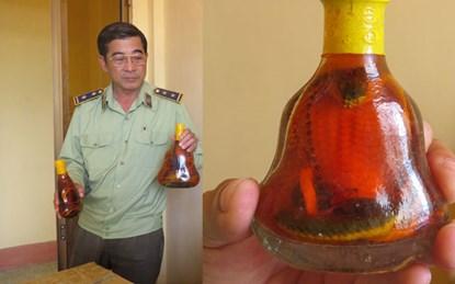 Hàng loạt chai rượu thuốc giả cũng được bày bán trên thị trường