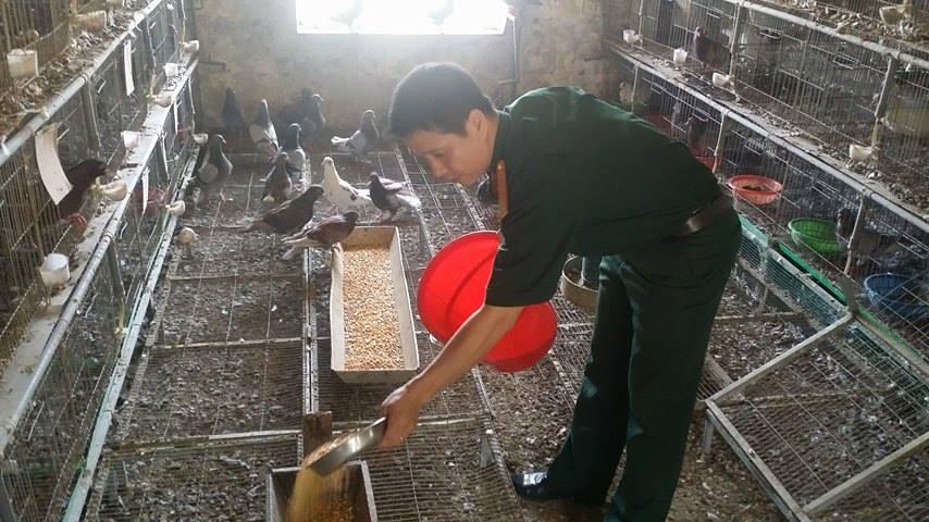 Đại úy Hoàng Trung Hà đang cho chim bồ câu ăn