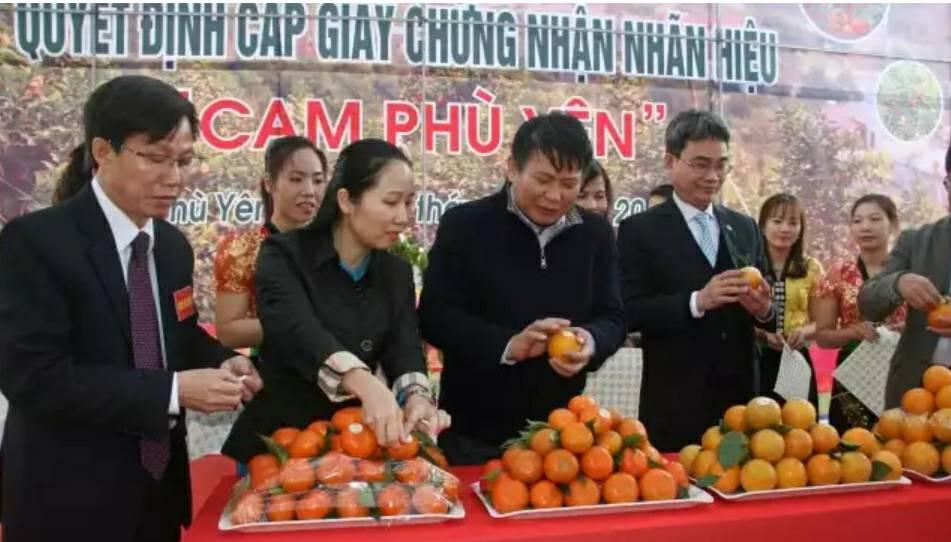 Cam Phù Yên được Cục Sở hữu trí tuệ công nhận nhãn hiệu cam 'xịn' - ảnh 1