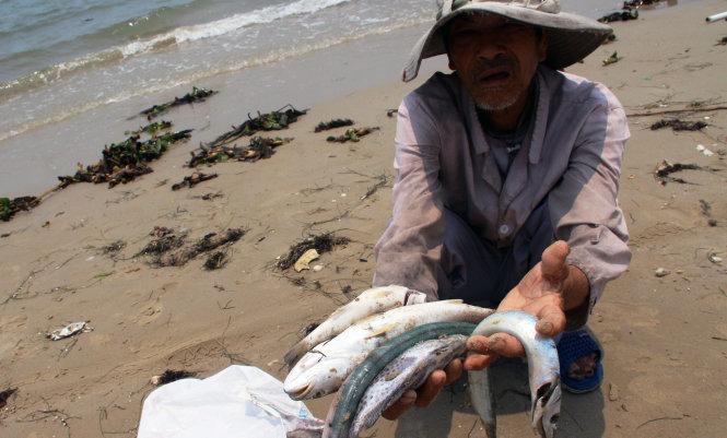 Xót ruột nhìn cá biển chết ngày càng nhiều. Ảnh: Tuổi Trẻ