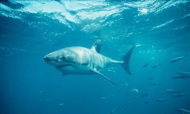 Các ngư dân bất lực chứng kiến một người đàn ông bị cá mập tấn công đến chết