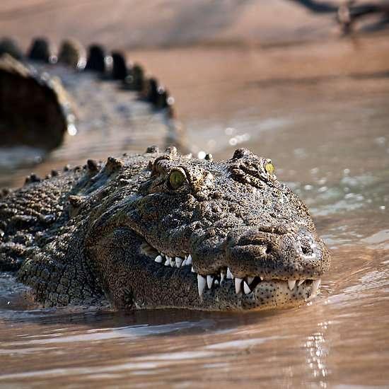 Cậu bé Manuel Abraham bị cá sấu ăn thịt khi đang chơi trên bờ. Ảnh Pulse