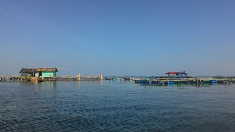 Nuôi cá bớp ở Kiên Giang