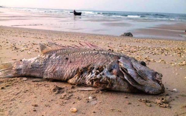 thủ tướng chỉ đạo vụ cá chết