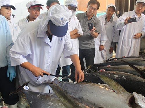 Cá ngừ Biển Đông của Việt Nam xuất khẩu sang Nhật Bản được giá do đánh bắt theo phương thức mới