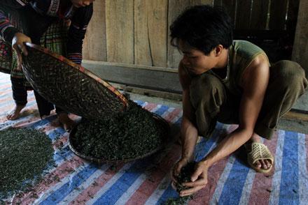 Chất gây ung thư được tìm thấy trong cafe hòa tan, chè sao và trà lúa mạch