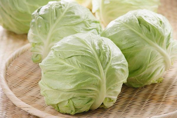 Chữa bệnh loét dạ dày là một trong những tác dụng của bắp cải trong kho mẹo vặt gia đình