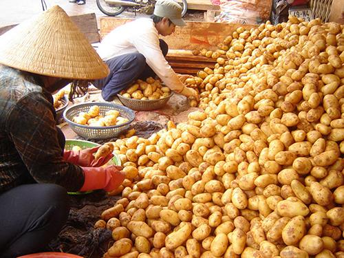 Cấm khoai tây Trung Quốc là biện pháp nguy hiểm