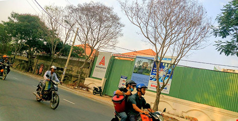 ba cây lim sét trên đường Nguyễn Văn Hưởng (quận 2) cũng chết khô
