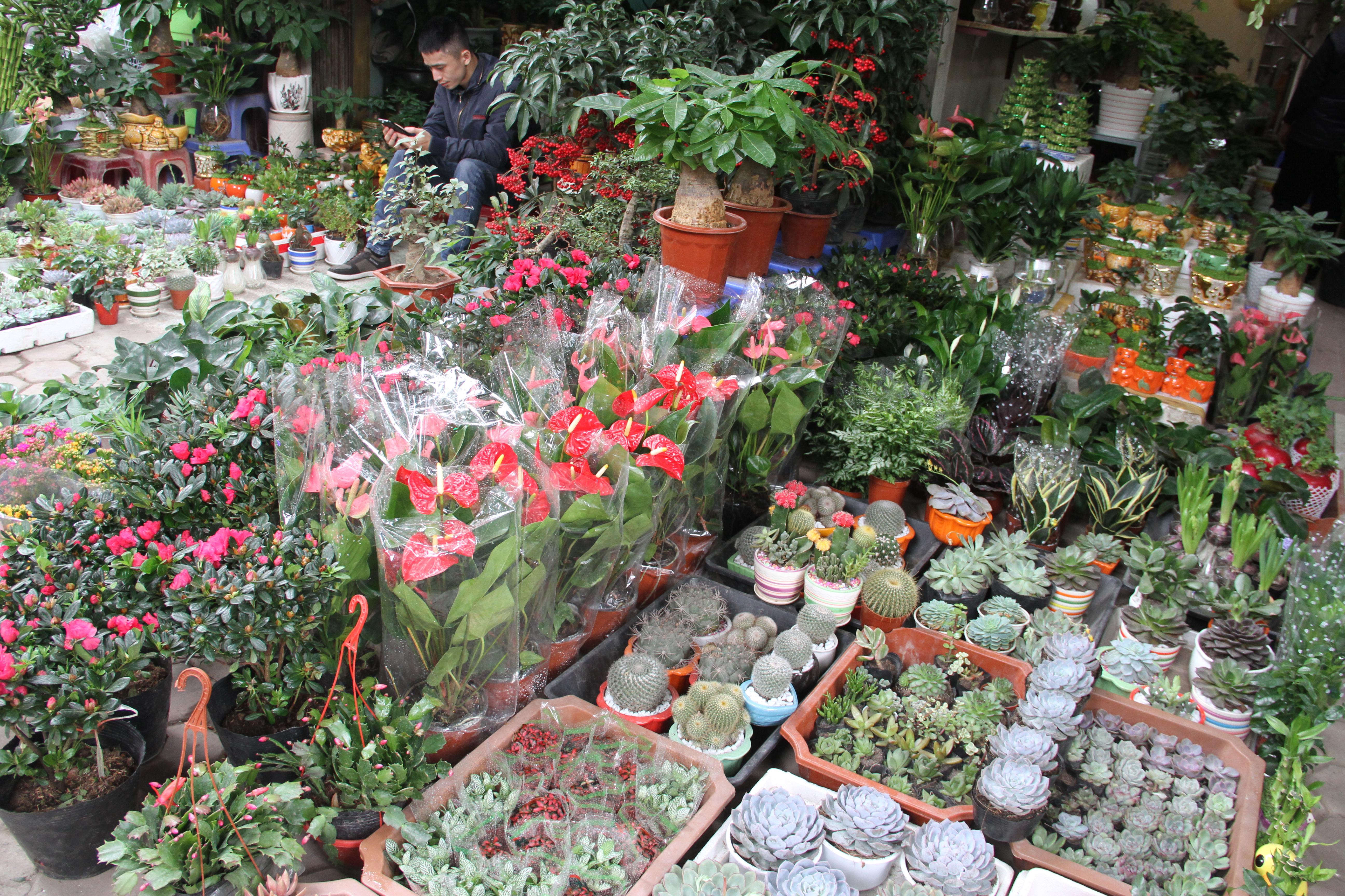 Chợ hoa Hoàng Hoa Thám khoe sắc rực rỡ đón xuân