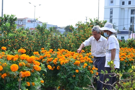 Hoa vạn thọ giá 350.000 đồng/ 1 cặp