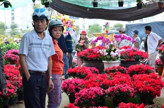 Hoa đỗ quyên hút khách tại chợ hoa Quảng trường 17/2
