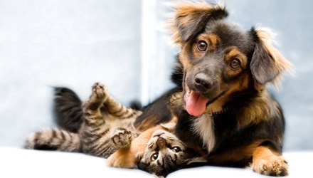 Thị trấn Trigueros del Valle của Tây Ban Nha vừa công nhận quyền công dân cho chó, mèo