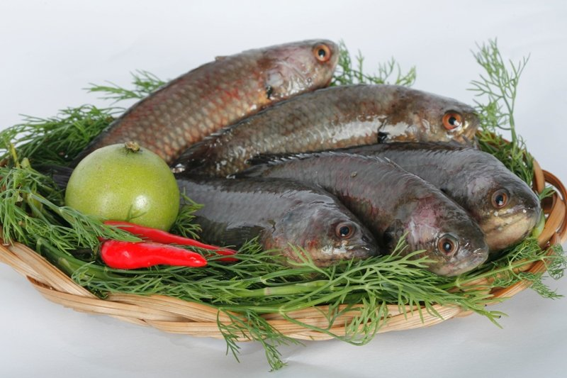 Các món ngon từ cá dứa, cá bớp, cá rô không chỉ thơm ngon mà còn có tác dụng chữa yếu sinh lý