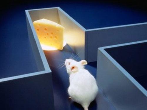 chuột siêu nhanh