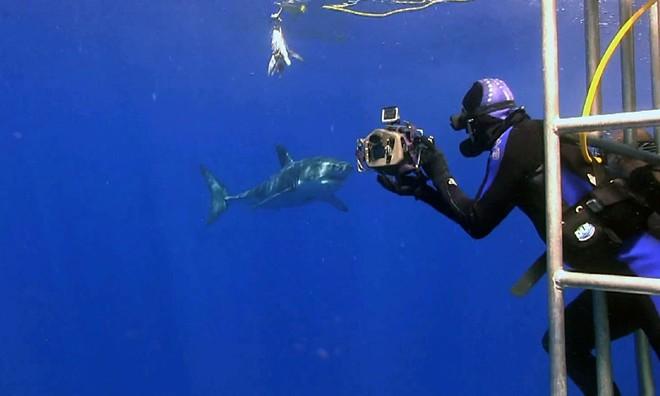 Chụp ảnh tự sướng cùng cá mập là việc không phải ai cũng dám thử