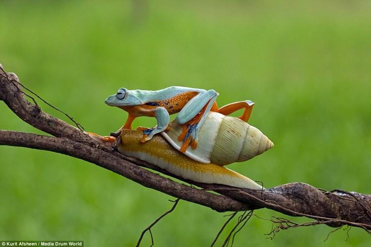 Đến địa điểm mong muốn, ếch ta bò xuống bỏ lại 'ân nhân'