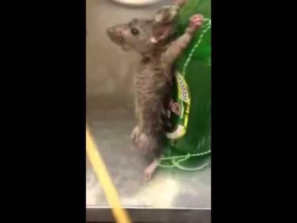 Bia được gắn những con chuột sống lên thân chai là câu chuyện lạ có thật ở một nhà hàng Trung Quốc