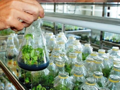công nghệ nano gắn với cuộc cách mạng hóa nông nghiệp