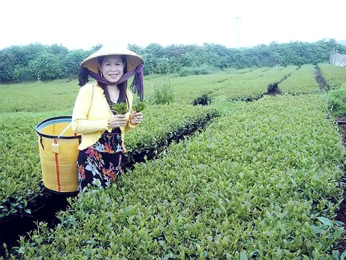 Chân dung bà Hà Linh, giám đốc Công ty trà Oolong Hà Linh