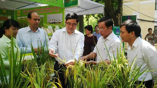 Nghiều giống cây trồng được phát triển, người tiêu dùng tin và sử dụng - sản phẩm của doanh nghiệp khoa học và công nghệ