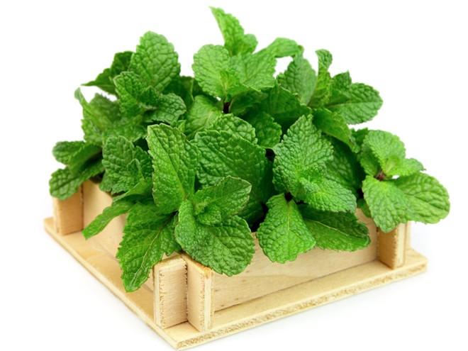 Những loại thảo dược giúp hạ đường huyết hiệu quả