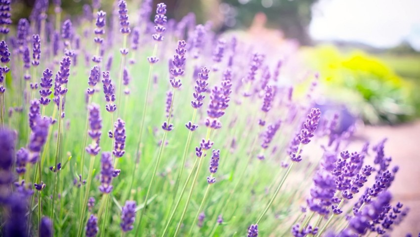 7 loại cây trồng trong nhà đuổi muỗi rất tốt cho gia đình bạn