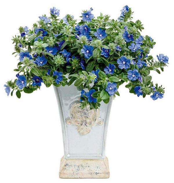Những loại hoa trồng ở ban công phù hợp nhất