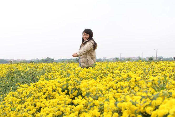 Những cánh đồng hoa đẹp mê hồn là đểm đến lý tưởng dịp Tết dương