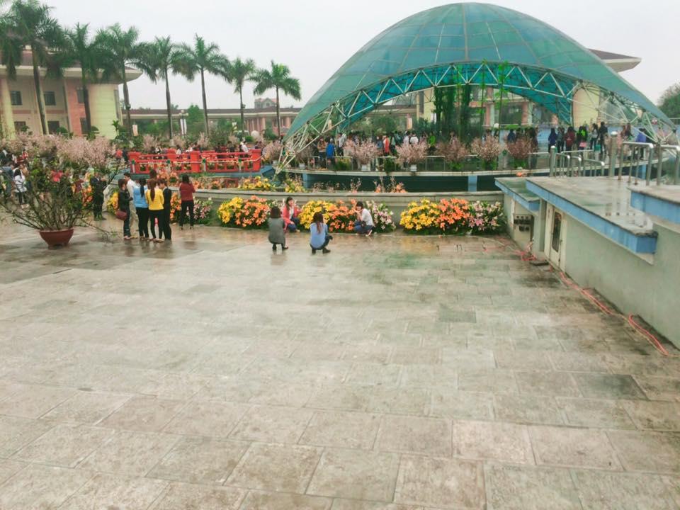 Triển lãm hoa anh đào tại Bắc Ninh từ 21- 25/3/2017