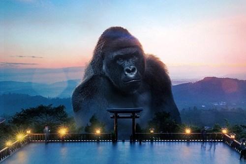 'Chết cười' với loạt ảnh chế 'Kong du hí khắp Việt Nam'