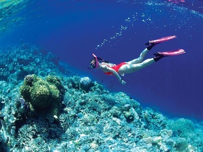 6 địa điểm lặn biển ngắm san hô đẹp nhất Việt Nam