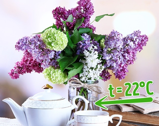 10 cách đơn giản giữ hoa 'lâu nhất có thể'