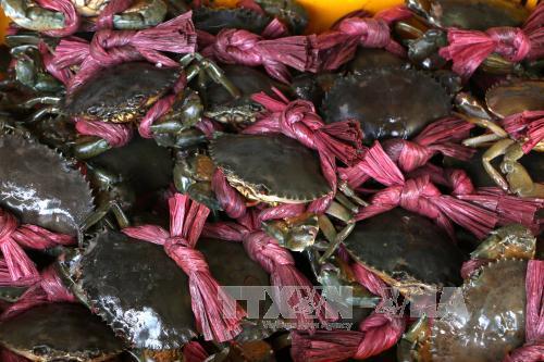 tra-vinh-gia-cua-bien-tang-manh-350000-dongkg