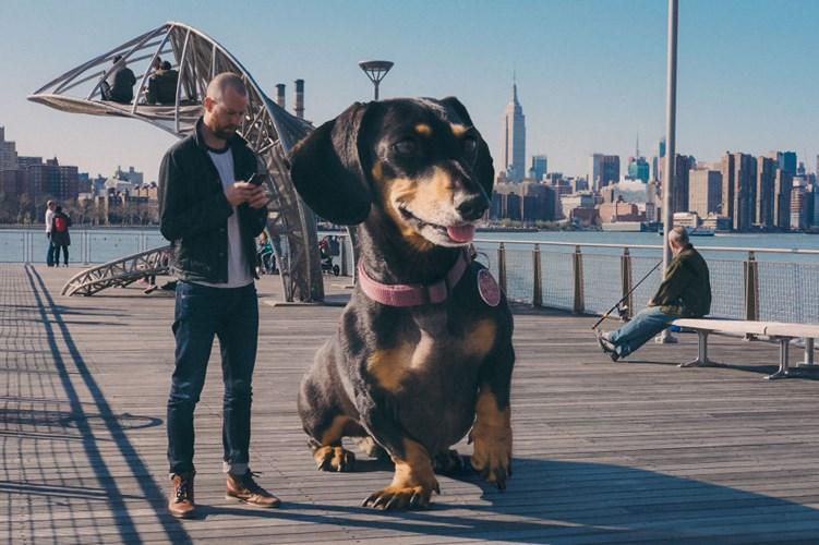 """Nàng chó xinh xắn cũng chính là người mẫu trong cuốn sách ảnh """"Vivian the Dog Moves to Brooklyn"""" của cậu chủ."""