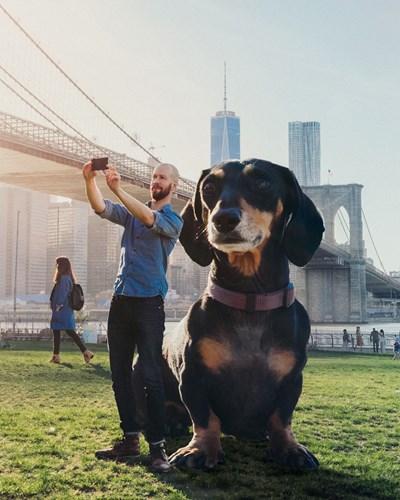 Thông qua những bức ảnh, Vivian đã trở thành một con chó khổng lồ, giống như một thần thú bảo hộ và điều này làm cô chó vô cùng mãn nguyện.