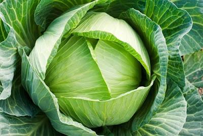 Chất glutamine trong bắp cải sẽ giảm bớt những cơn đau do bệnh viêm khớp gây ra