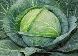 Bắp cải xanh giảm đau viêm khớp