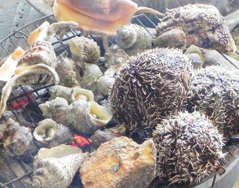 Ninh Thuận không chỉ có cát và nắng, Ninh Thuận còn có biển, bãi tắm và hải sản ngon không kém bất cứ vùng nào trên cả nước. Đủ các loại ốc, mực, tôm, cua, nhum… với giá khá rẻ bán công khai nhiều nơi, đây là chốn bồng lai cho kẻ khoái ăn uống đồ biển.