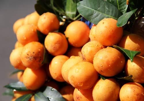 Thanh trà là loại trái cây khác thu hút không kém bưởi năm roi. Cứ nhìn những chùm quả tròn vàng ươm lúc tháng giêng, ba, khó người nào kìm lòng mà không mua vài ký.  Có hai loại thanh trà: chua và ngọt phục vụ khẩu vị từng người. Thanh trà chín chấm muối ớt chinh phục tất cả chị em phụ nữ như rất nhiều loại trái cây chua chua được ưa chuộng xưa nay.